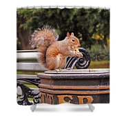 Scratchy Shower Curtain