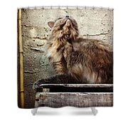 Scritch Scratch Shower Curtain by Katie Cupcakes
