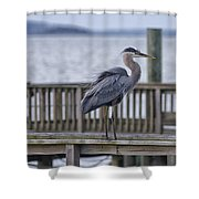 Scruffy Heron Shower Curtain
