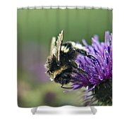 Scrufy Old Bee Shower Curtain