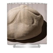 Sea Biscuit Clypeaster Rosaceus Shower Curtain
