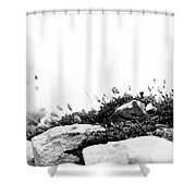 Sea Campion Wall Shower Curtain