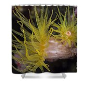 Sea Cups In Raja Ampat, Indonesia Shower Curtain