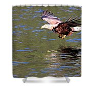 Sea Eagle's Water Landing Shower Curtain