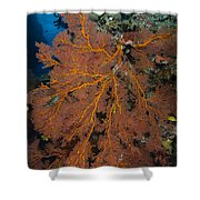 Sea Fan, Fiji Shower Curtain