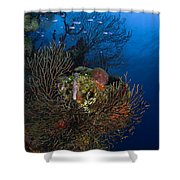 Sea Fan Seascape, Belize Shower Curtain