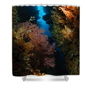 Sea Fans, Fiji Shower Curtain