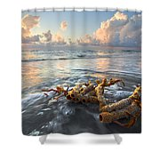 Sea Jewel Shower Curtain