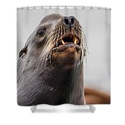 Sea Lion And Yellow Fangs Shower Curtain