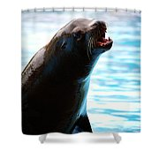 Sea-lion Shower Curtain
