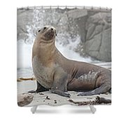 Sea Lion Monterey Shower Curtain