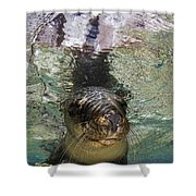 Sea Lion Portrait, Los Islotes, La Paz Shower Curtain by Todd Winner