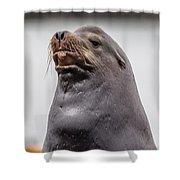 Sea Lion Satisfaction Shower Curtain