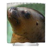 Sea Lion Up Close. Shower Curtain