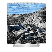Sea Lions In Alaska Shower Curtain
