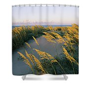 Sea Oats, Dunes, And Beach At Oregon Shower Curtain