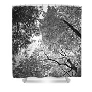 Sea Of Leaves Shower Curtain