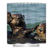 Sea Otter Enhydra Lutris Bachelor Male Shower Curtain