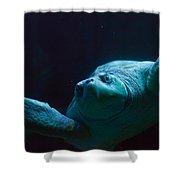 Sea Turtle In Deep Ocean Shower Curtain