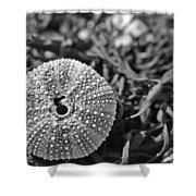 Sea Urchin On Seaweed Shower Curtain by David Rucker