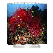 Sea Whips And Soft Coral, Fiji Shower Curtain