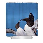 Seabird Love Shower Curtain