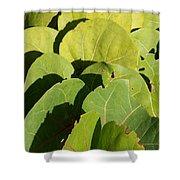 Seagrape Leaf Layer Shower Curtain