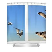 Seagull Collage Shower Curtain