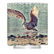 Seagull Flaps Shower Curtain