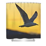 Seagull Flying At Dusk With Sunset Shower Curtain by Robert Postma