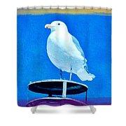Seagull Fun Colors Shower Curtain