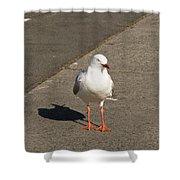 Seagull In The Summer Sun Shower Curtain by Ulrich Schade