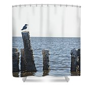 Seagull On A Post Shower Curtain