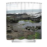 Seagull Resort Shower Curtain