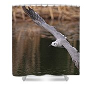 Seagull Seagull On The Move Shower Curtain