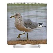 Seagull Stomp Shower Curtain
