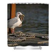 Seagull Swallows Starfish Shower Curtain
