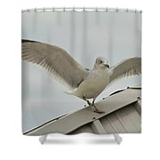Seagull With Character Shower Curtain