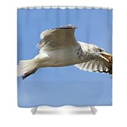 Seagull With Snail Shower Curtain
