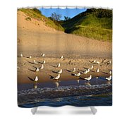 Seagulls At The Bowl Shower Curtain