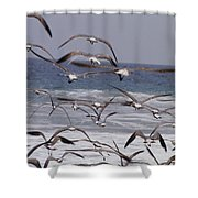 Seagulls Fly Over Surf Shower Curtain