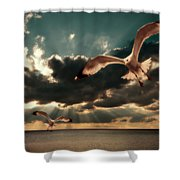 Seagulls In A Grunge Style Shower Curtain by Meirion Matthias