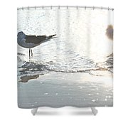 Seagulls In A Shimmer Shower Curtain