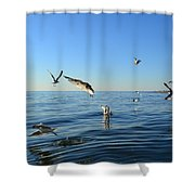 Seagulls Over Lake Michigan Shower Curtain
