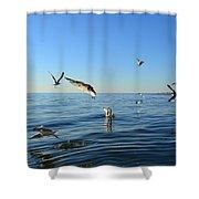 Seagulls Over Lake Michigan Shower Curtain