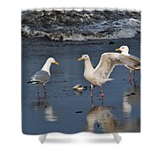 Seagulls Passion Shower Curtain