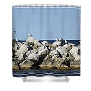 Seaguls On Boulders In Lake Erie Shower Curtain