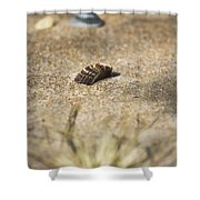 Seahells V3 Shower Curtain