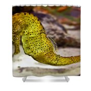 Seahorse Of Course Shower Curtain
