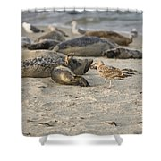 Seal 2 Shower Curtain
